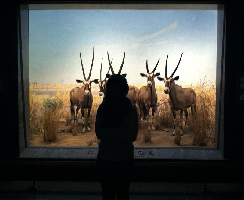 American Museum of Natural History, diarama