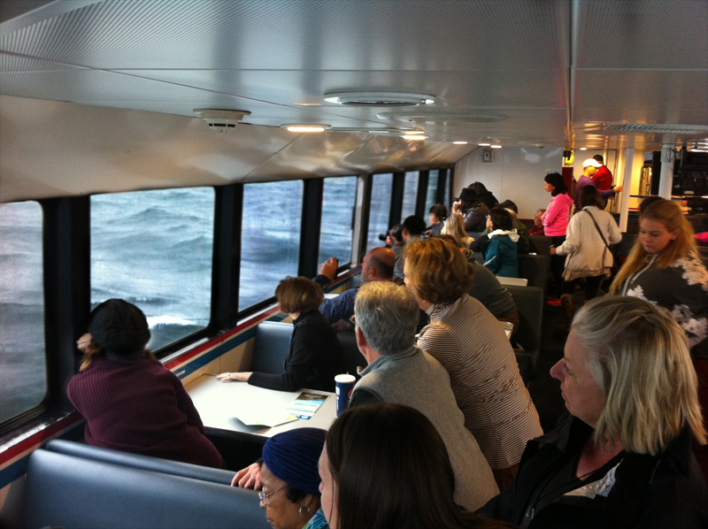 whale watching people