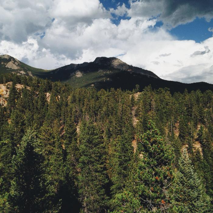 colorado, mountain, forrest